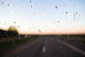 Na sliki je mrčes na vetrobranskem steklu.